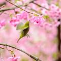 Photos: 久留米喜桜公園♪
