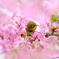 久留米喜桜公園♪