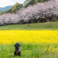Photos: 水城跡♪