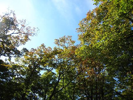 山頂近くで色づき始めた木々