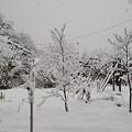 Photos: 雪と白い木