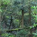 写真: 緑の森の