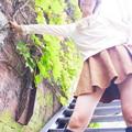 Photos: ローアングル☆