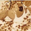 Photos: 切ない秋