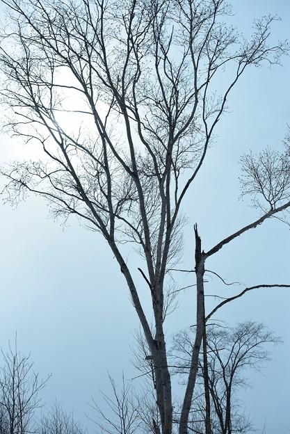 写真: 冬の終わり