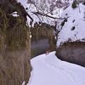 写真: 苔の回廊1