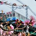 写真: 春フレーム