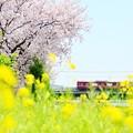 写真: 春たけなわ