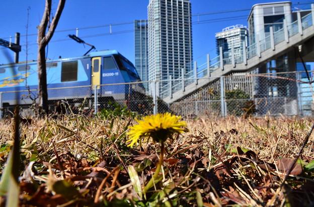 Photos: 春一つ