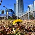 写真: 春一つ