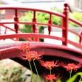 写真: 赤to紅