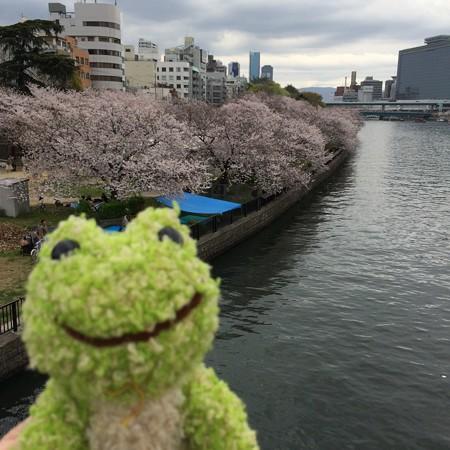 大阪で花見