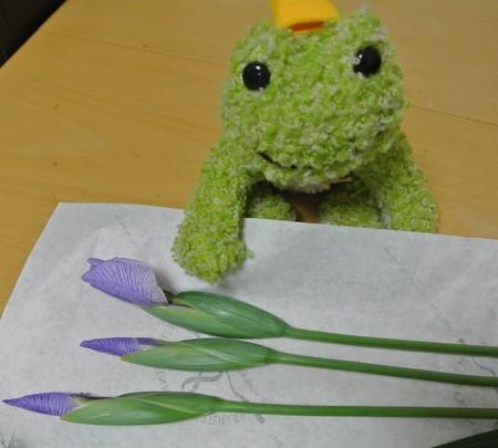一番花はココ