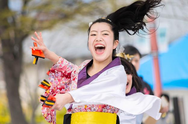 京都さくらよさこい2016 桜道里