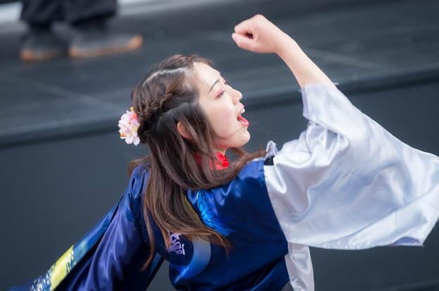 京都さくらよさこい2016 舞心座 蒼