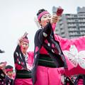 写真: どまつり夜桜 in 岡崎2016 らんラン東海