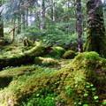 写真: もののけの森