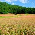 写真: 「青空と赤蕎麦畑」