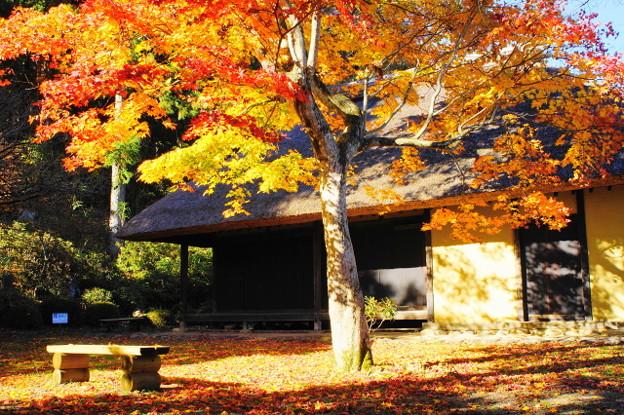 写真: 「釜井庵の秋」