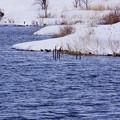 Photos: 「中綱湖冬景」