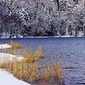 Photos: 「中綱湖冬景」その2