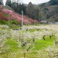 Photos: 「梅花の歌」