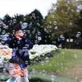 写真: シャボン玉の花の正体
