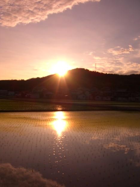 Photos: 太陽が水に