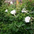 Photos: 花
