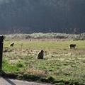 写真: 福島にて野猿の群に遭遇