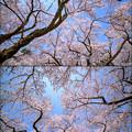 Photos: 咲き乱れ