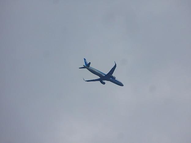津田の松原上空飛行