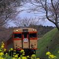 写真: いすみ鉄道 急行「夷隅」