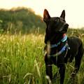 写真: 流浪犬之夏