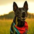 写真: 流浪犬之夏2