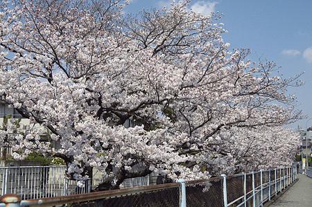 東戸塚の桜 14