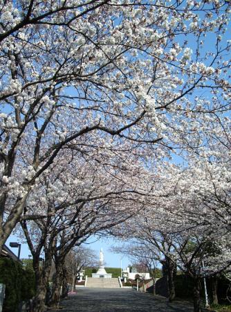 徳翁寺の桜