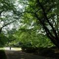 Photos: 新緑の道