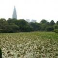 Photos: 中の池