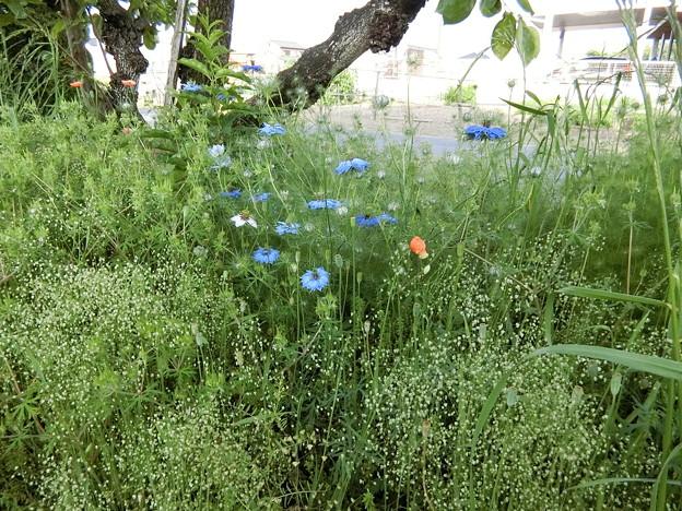 野の花のなかで^0^