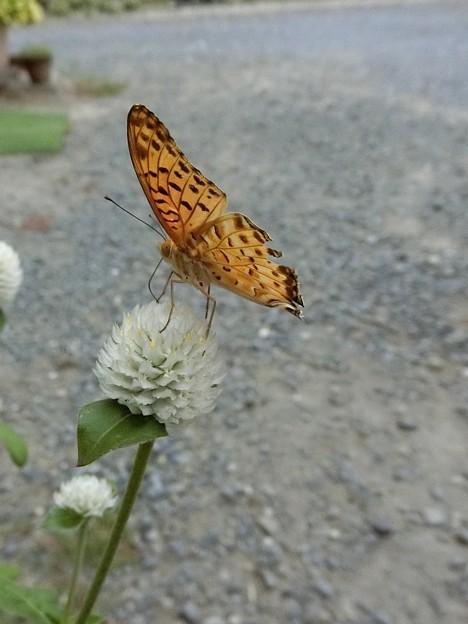 これ蝶さん♪♪