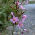 写真: この花は野の花かな??
