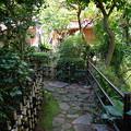 双柿舎の緑あふれる庭
