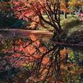 写真: [18]「六義園の秋」