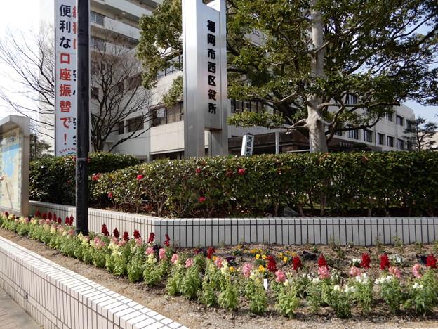 2018.2.23 区役所前の花壇