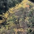 2018.12.9 山の黄葉