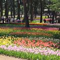 Photos: 国営ひたち海浜公園