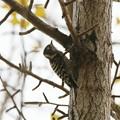 昭和記念公園の野鳥(3)