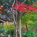 相模原公園の紅葉