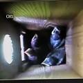 巣箱の中のブッポウソウの雛さん